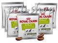 Royal Canin Educ 50g*30tk